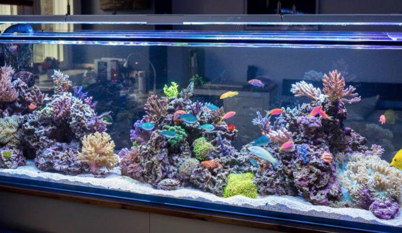 аквариум тбилиси купить
